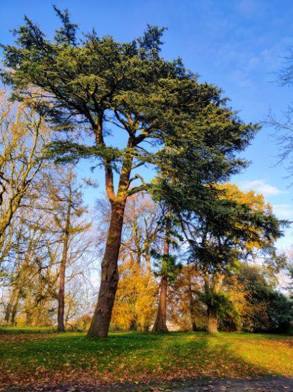 Lawn Wood, November 2002. We Are Swindon