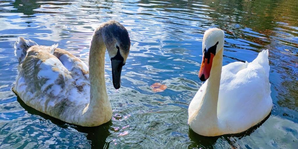 Queens Park, Swindon. We Are Swindon