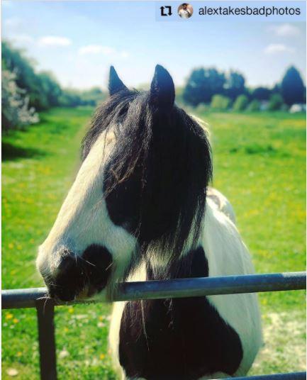 Lydiard Horse Swindon by Swindon photographer Alex White We Are Swindon