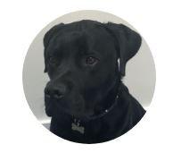 Swindon Charity Headway brainy dog Chase
