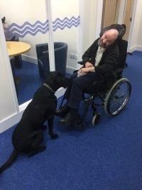 Swindon Charity Headway Swindon brainy dog chase