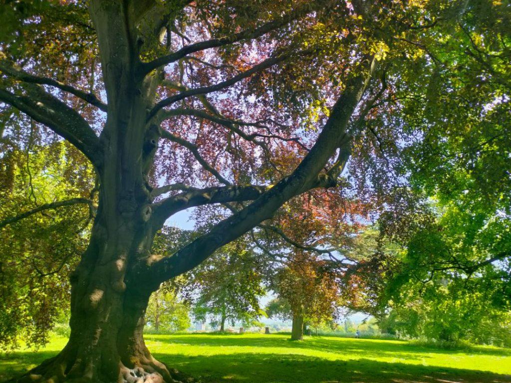 Lawn Woods Swindon